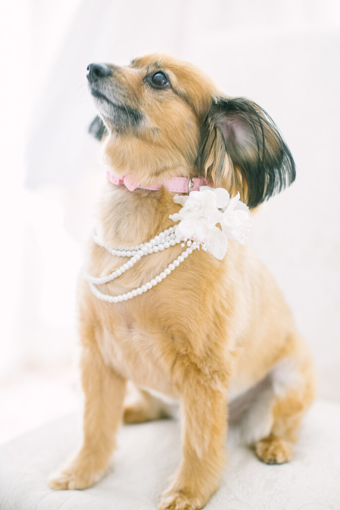 Tu mascota en tu boda - Love And Light Photographs