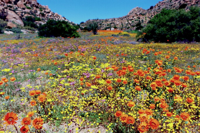 Photo : Namaqualand - Creative Commons
