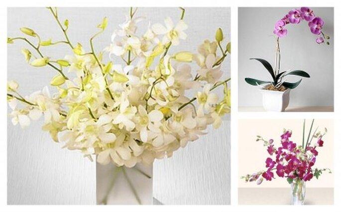 Flores exóticas. Fotos de Floresta Coyoacán.