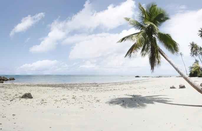 Playa del océano de Brasil con una palmera de coco, Bahía.