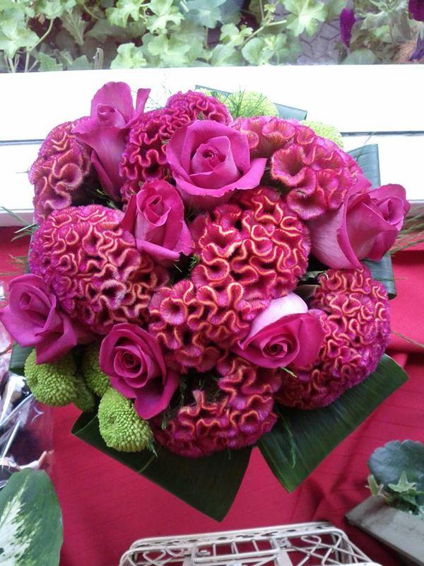 Abril Flores y Plantas