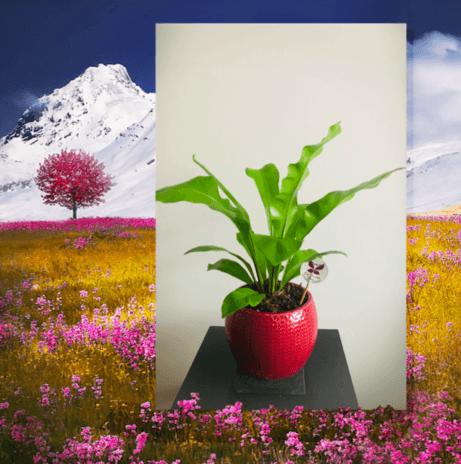 Eco Dreams Perú
