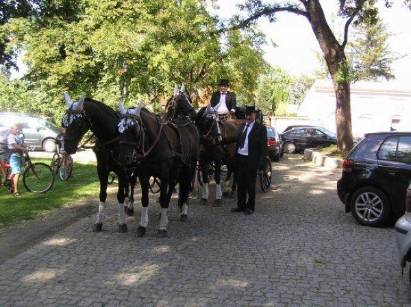 Bryczki do ślubu Stajnia Gaj