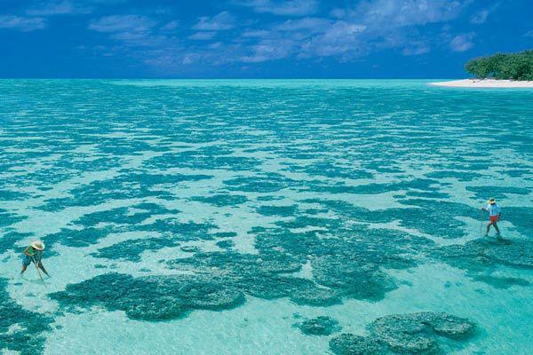 Blue Marlin Viaggi