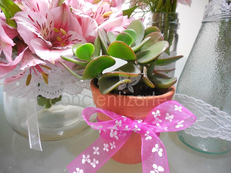 Planta Suculenta en maceta de arcilla, decorada con cinta de organza. Recuerdo de boda, shower.