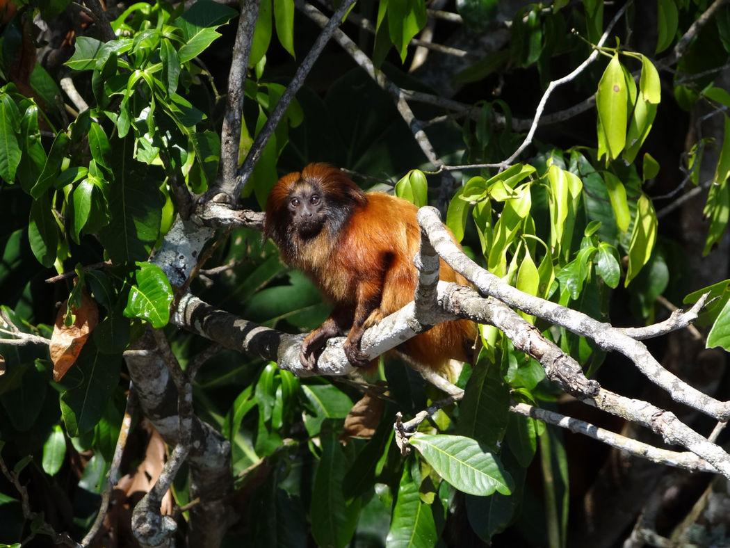 A la découverte de la forêt de Tijuca, plus grande forêt urbaine au monde