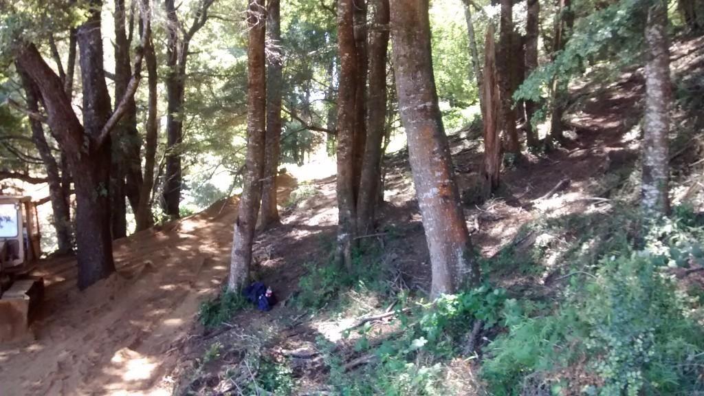 Bosques del Liucura