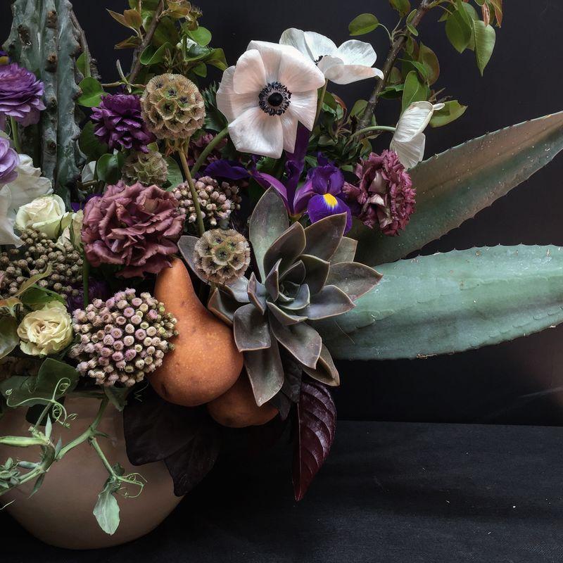 Allium By Olympia
