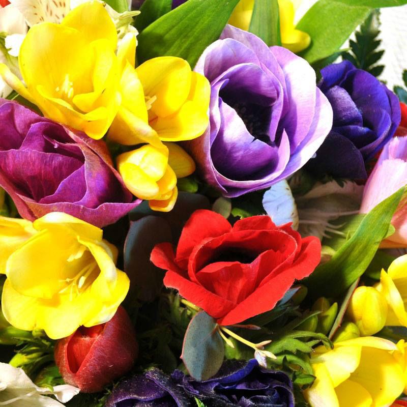 Flowers to Barcelona