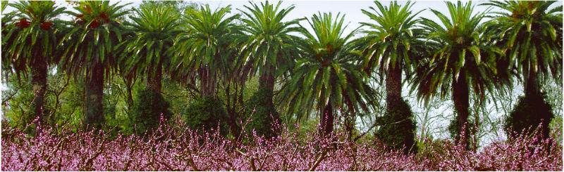 Paseo de Palmeras - Hacienda La Vara