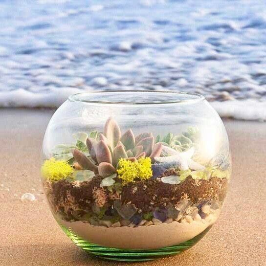 Terrarium Glass Garden