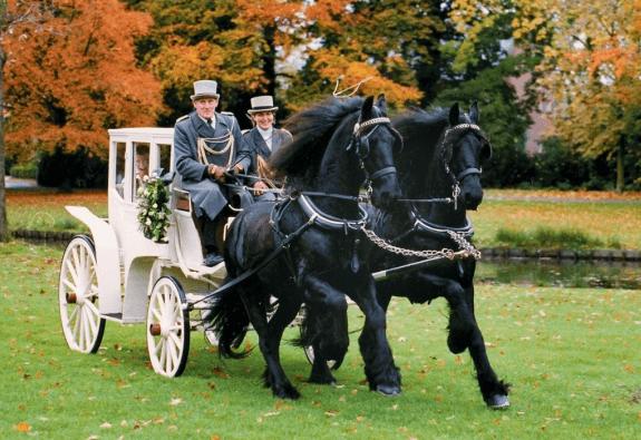 Stalhouderij Van Roekel