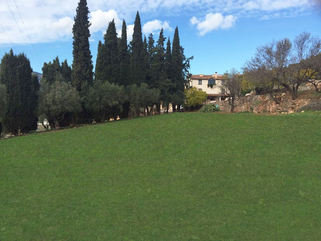 El jardín de los olivos