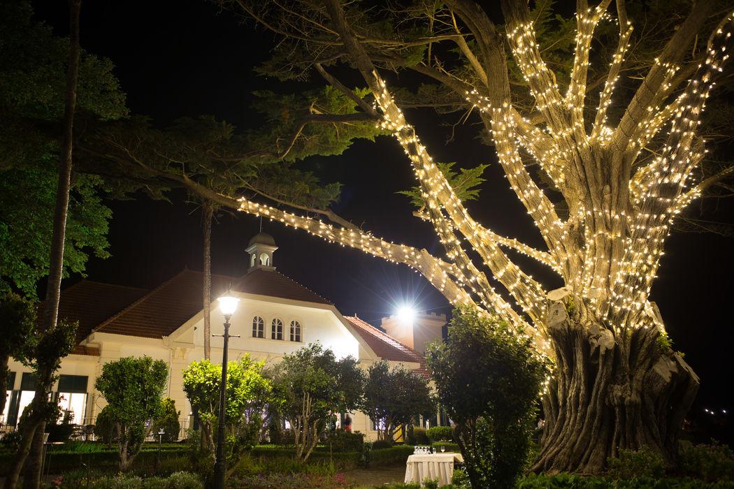 Iluminação Árvore