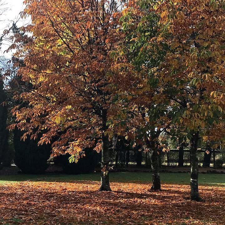 Pucon Green Park