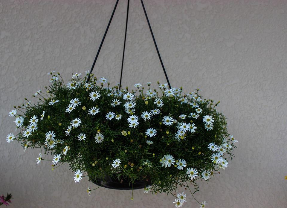 Floricultura Art Viva