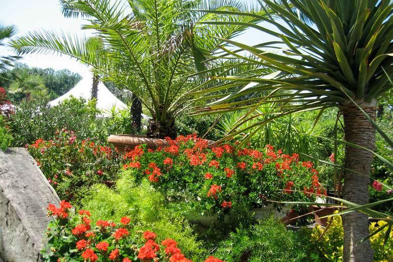 Beispiel: Einmalige Pflanzenwelt, Foto: Giardino Verde.