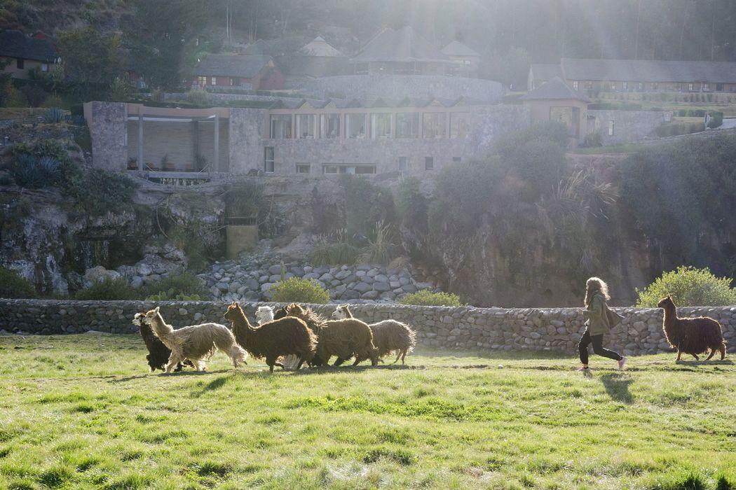 Rancho Alpaca