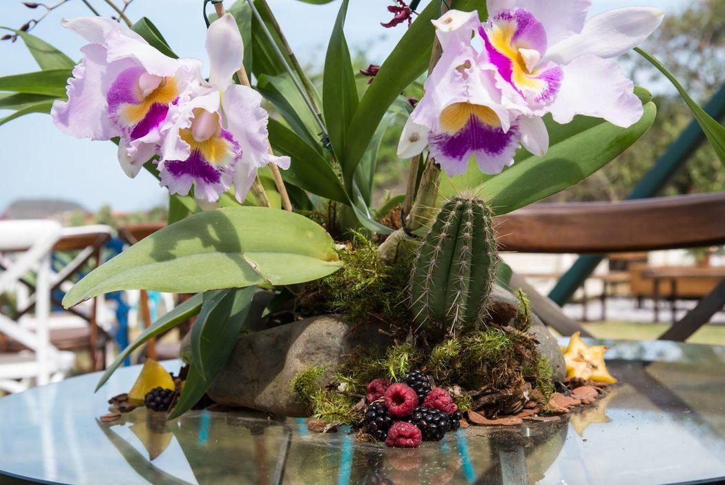 Orquídeas, cactus e frutas? Sim! E fica lindo!