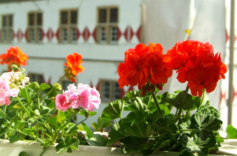 Beispiel: Balkon, Foto: AKZENT Hotel Tietmeyer.