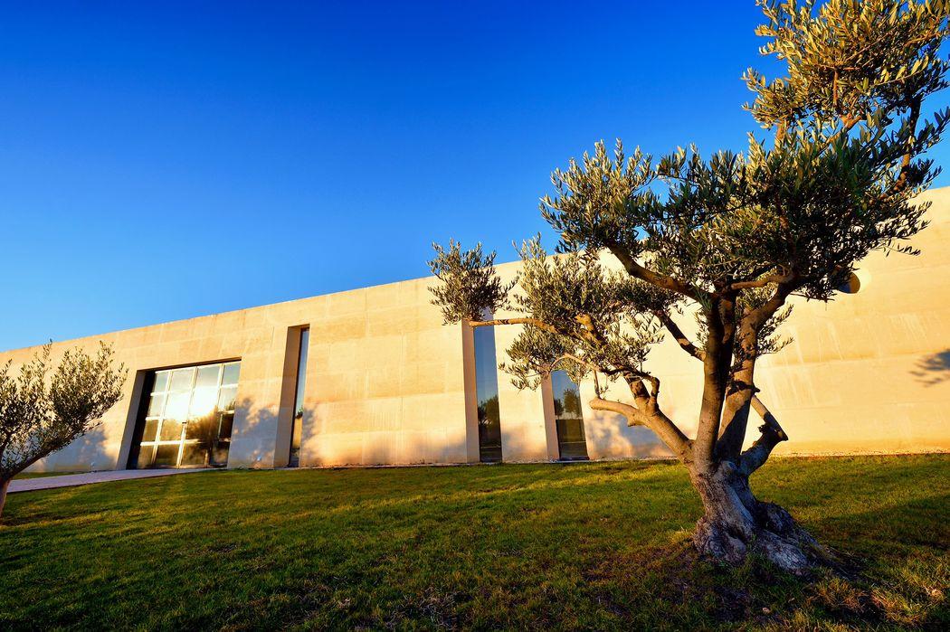 Vue Salle Côté Oliveraie