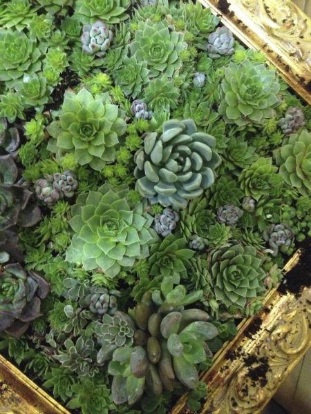 Foto: O meu amor é verde
