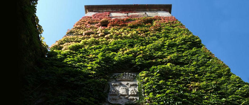 Castillo de Torrefiel