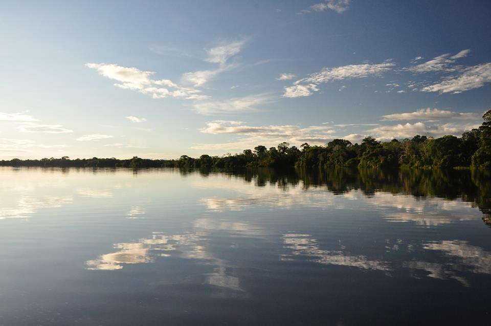 Puro Amazonas