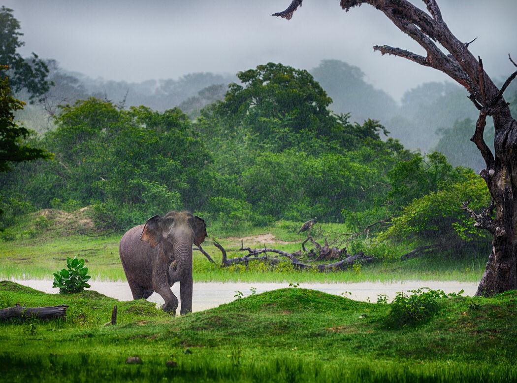 Lunas de Miel en Sri Lanka