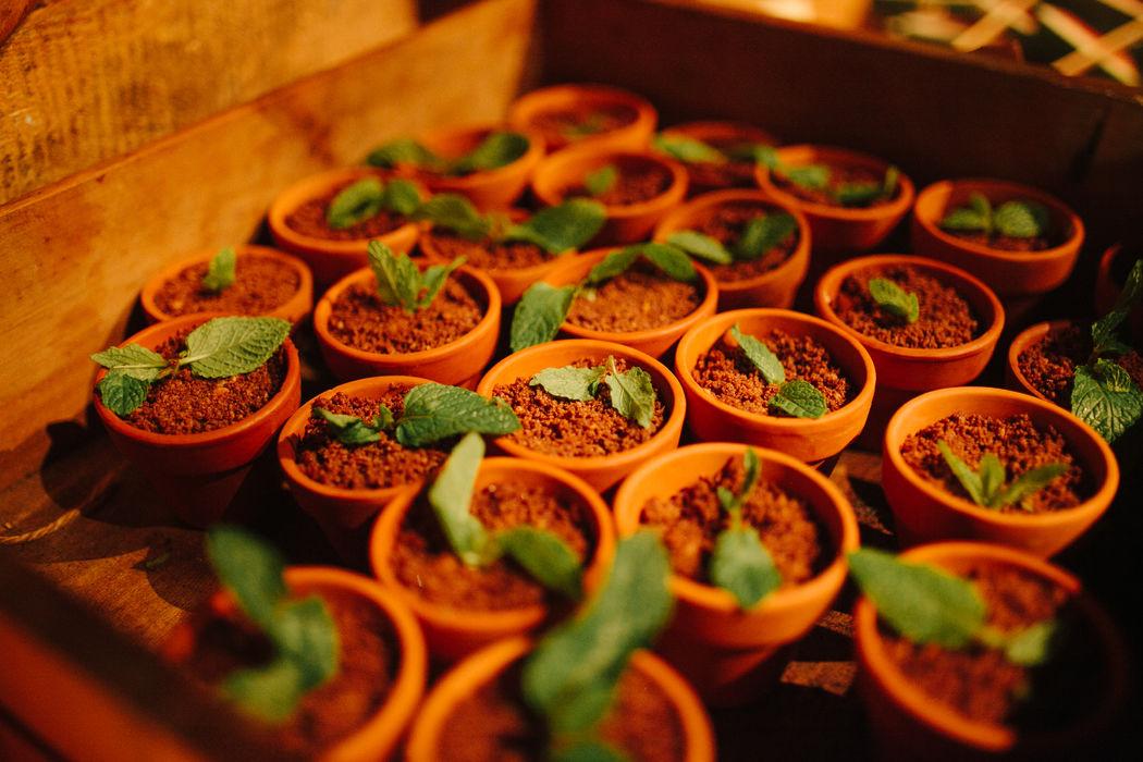 Tiramisú - Catering Bodas 21 de Marzo