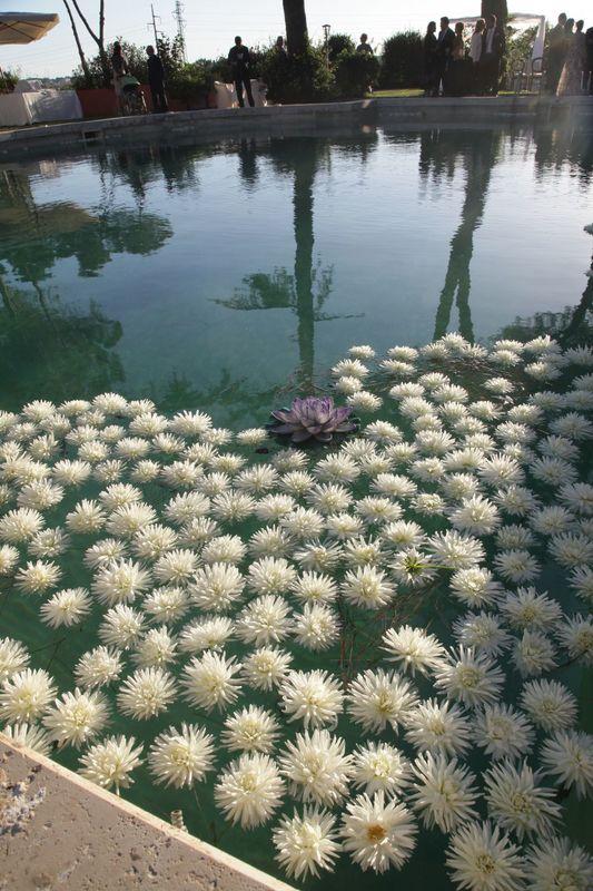 I fiori in piscina