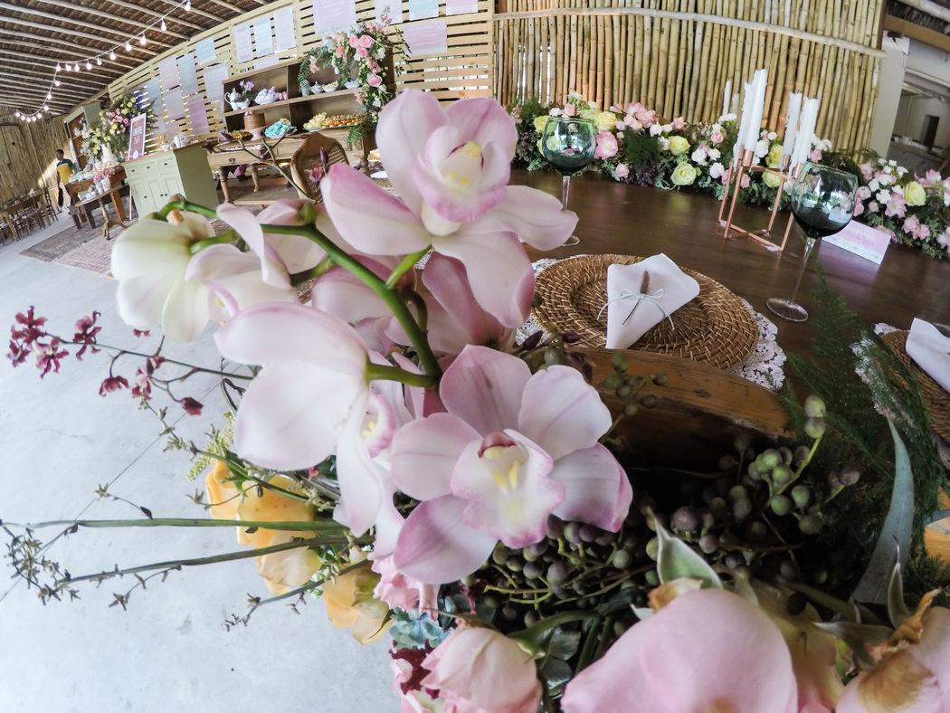 Orquídeas para florir