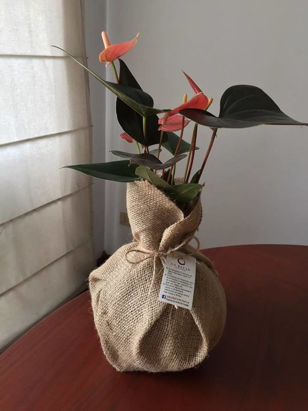 La Belle Kokedama