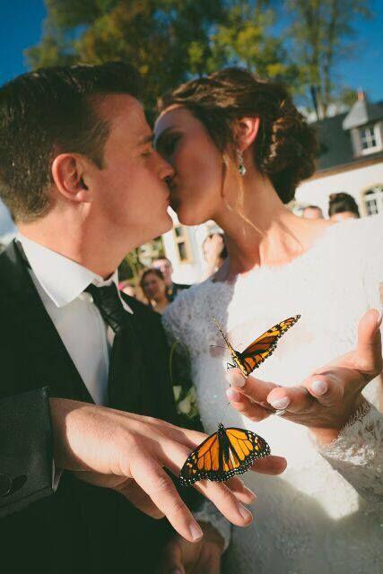 Il Volo delle Farfalle
