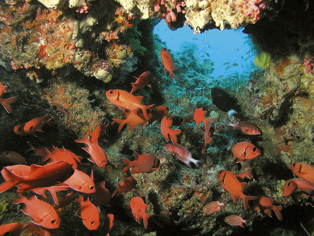 Plongée aux Maldives