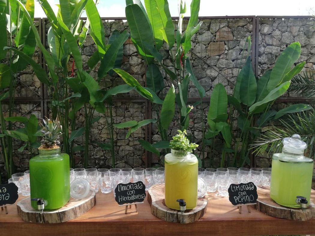 Moloko's Bar Experience