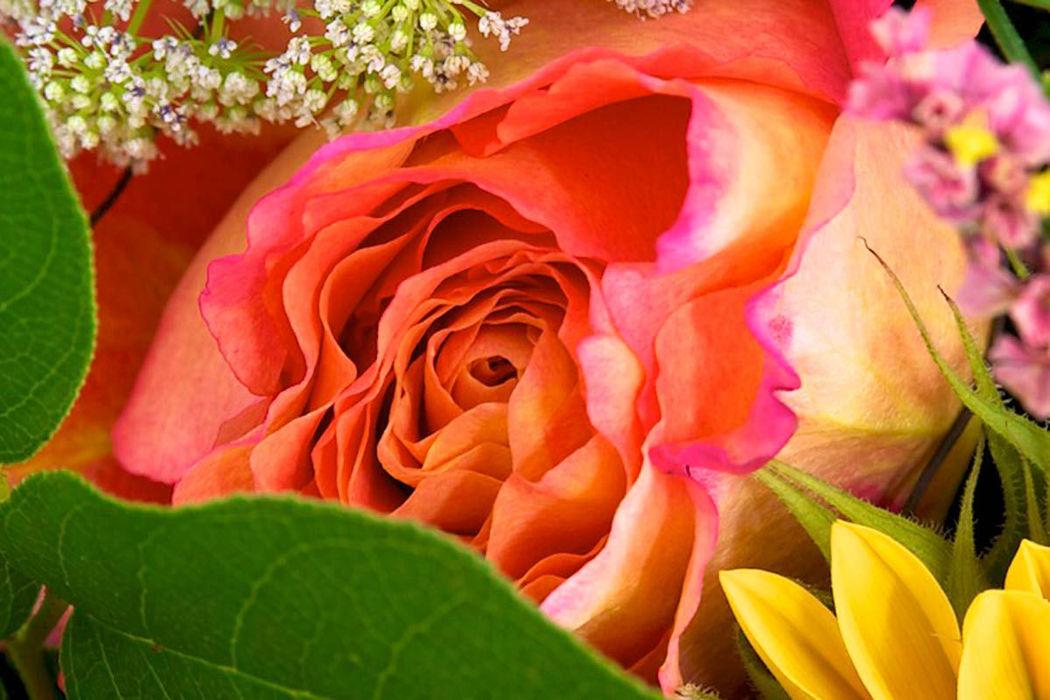 Beispiel: Blumenimpression, Foto: Mohnblume.