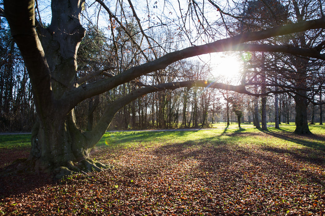 Beispiel: Schlosspark Location Foto: wedding AGENCY