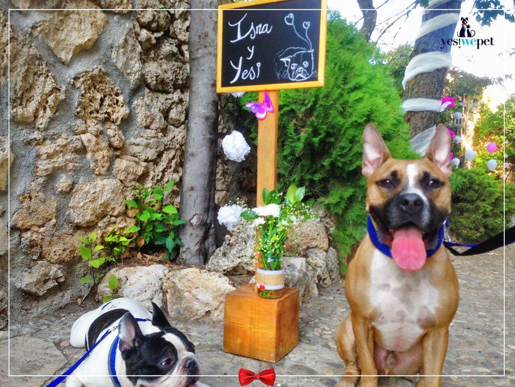 Yes! We Pet - Tu perro en tu boda