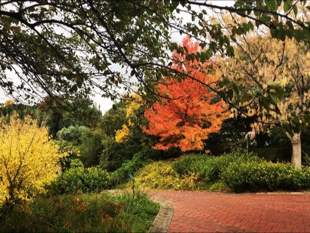 Jardín-botánico