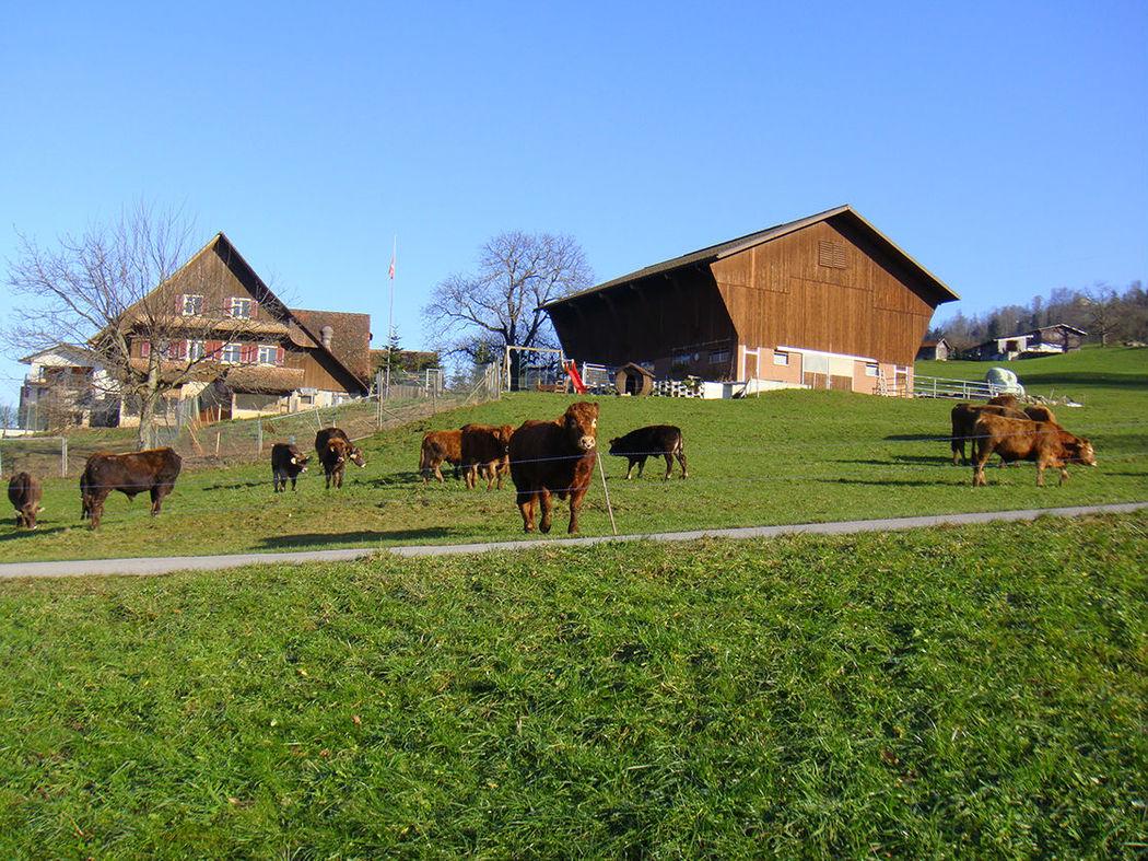 Beispiel: Aussenansicht Bauernhof, Foto: Hof-Landschi.