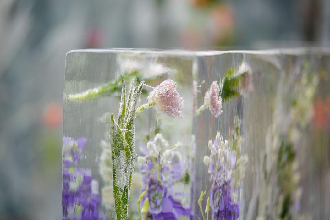 Вмороженные цветы для оформления зоны церемонии