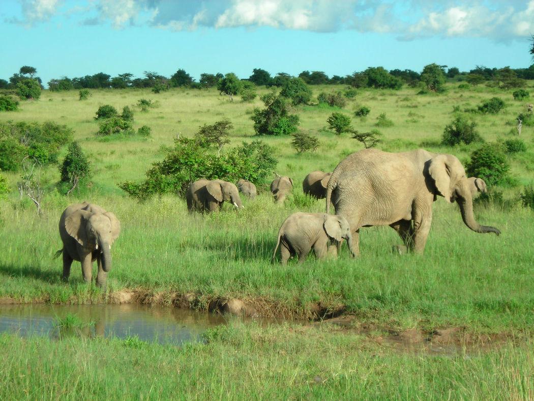 SAFARIS EN KENYA Y TANZANIA