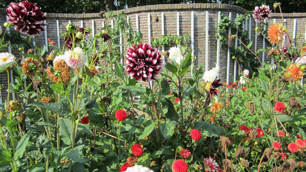 Diverse bloemen in de tuin Slot Zuylen