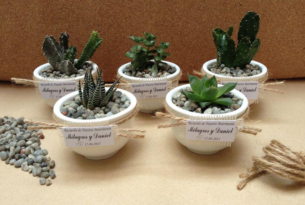 RECUERDOS VIVOS Y ECOLOGICOS: variedad de cactus y suculentas