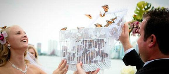 Liberación de mariposas en eventos