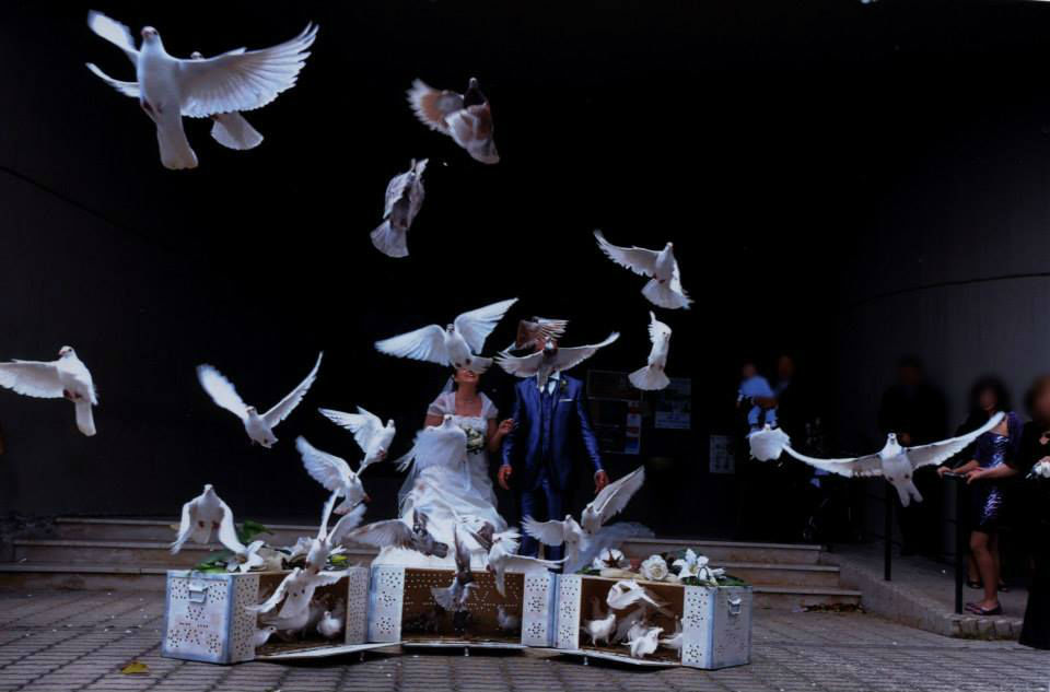 Lancio di colombi