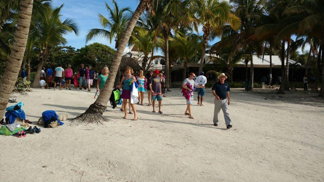Paradise Transfers & Tours