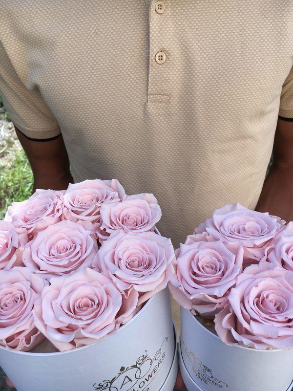 Amelia flowers
