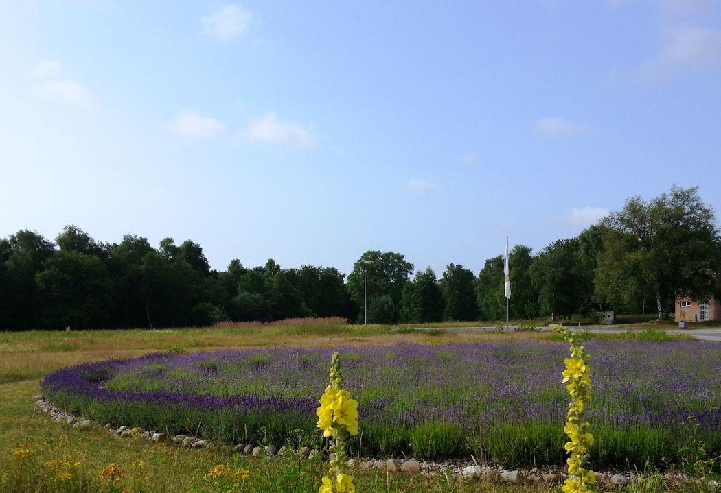 Lavendellabyrinth
